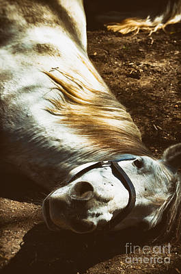 Photograph - White Horse On Ground by Silvia Ganora