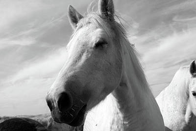 Photograph - White Horse Portrait by Aidan Moran