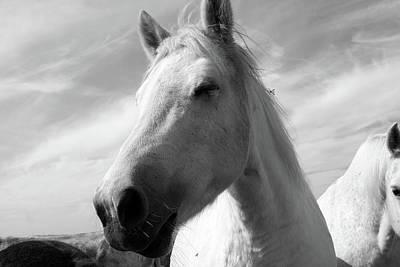 Photograph - White Horse Portrait by Aidan Moran
