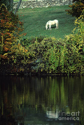 White Horse Reflected In Autumn Pond Art Print