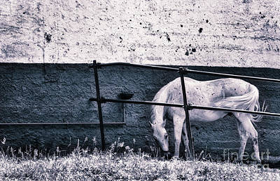 White Horse Art Print by Silvia Ganora