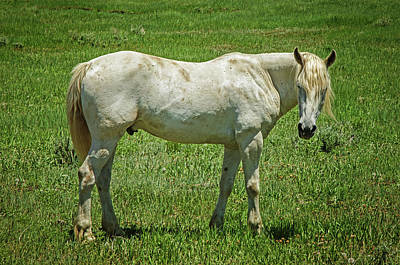 Photograph - White Horse by Susan McMenamin