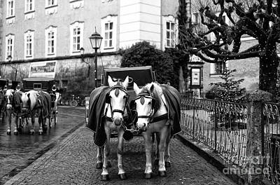 Photograph - White Horses In Salzburg by John Rizzuto
