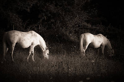 White Horses On Field Art Print by Antonio Costa