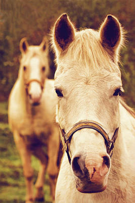 Photograph - White Horses by Peggy Collins