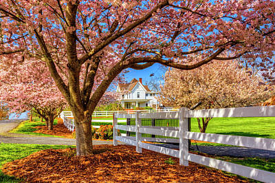 Photograph - White House Under The Cherry Trees by Debra and Dave Vanderlaan
