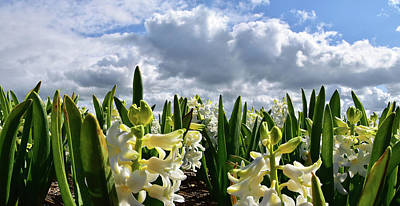 Digital Art - White Hyacinth Field by Mihaela Pater