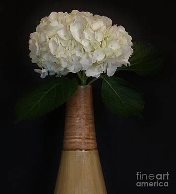 White Hydrangea In Gold Vase Art Print by Marsha Heiken