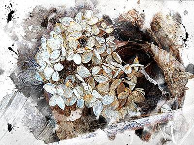 Photograph - White Hydrangea by Marcia Lee Jones