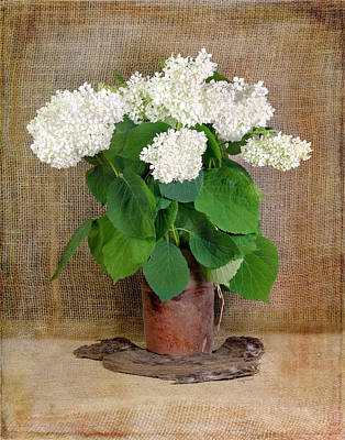 Photograph - White Hydrangea On Burlap by Betty Denise