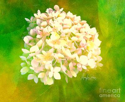Photograph -  White Hydrangea   Soft Texter by MaryLee Parker