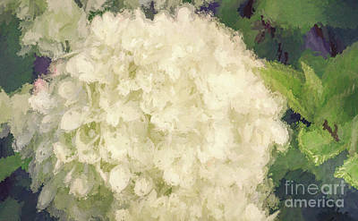 Photograph - White Hydrangeas - Bring On Spring Series by Andrea Anderegg