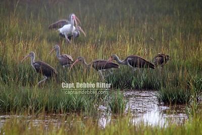 Photograph - White Ibis 3428 by Captain Debbie Ritter