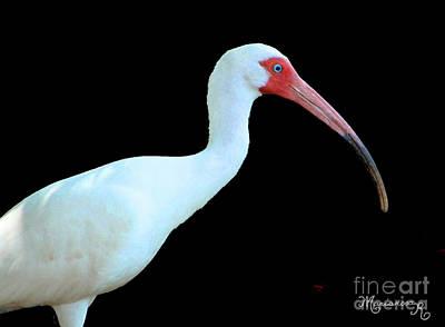 Photograph - White Ibis by Mariarosa Rockefeller