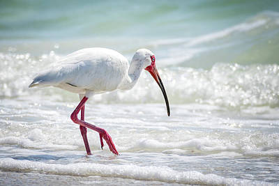 Ibis Photograph - White Ibis by Michael Weber