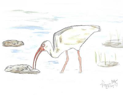 Ibis Mixed Media - White Ibis by Ronnie Maum