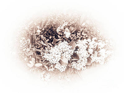 Photograph - White Impression by Fei Alexander