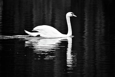 Photograph - White In Black  by Teemu Tretjakov