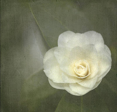 White Flower Photograph - White In The Corner by Rebecca Cozart
