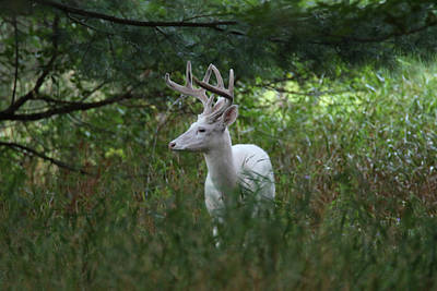 Photograph - White In The Woods 1 by Brook Burling