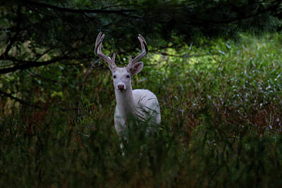 Photograph - White In The Woods by Brook Burling