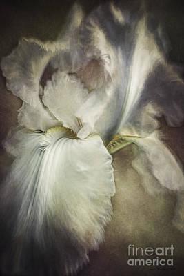 Photograph - White Iris by Jean OKeeffe Macro Abundance Art