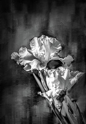 Photograph - White Iris On Abstract Background Bw #g4 by Leif Sohlman