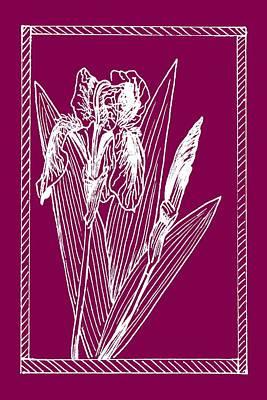 Drawing - White Iris On Transparent Background by Masha Batkova