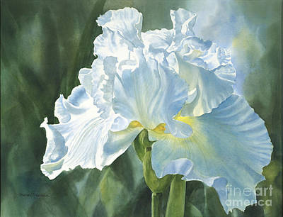 Blue Iris Painting - White Iris by Sharon Freeman
