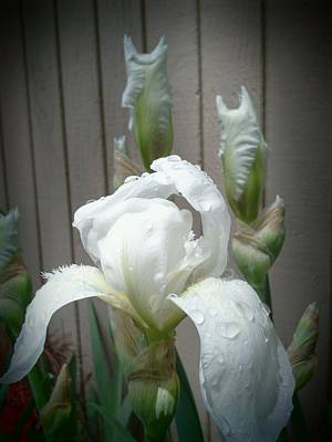 Photograph - White Iris Through A Keyhole by Tim Donovan