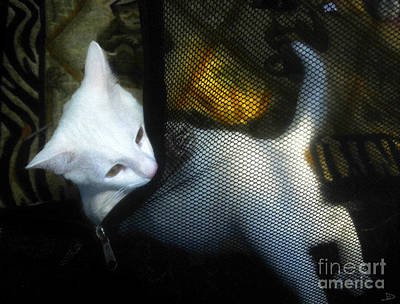 Youthful Painting - White Kitten by David Lee Thompson