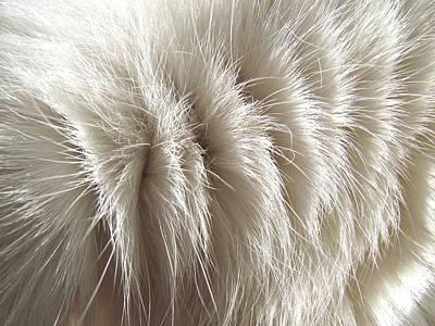 'white Kitty Fur' Art Print by Paula  Heffel
