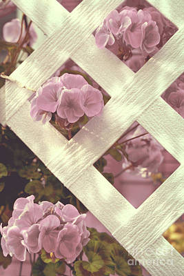 Pink Fence Painting - White Lattice by Mindy Sommers