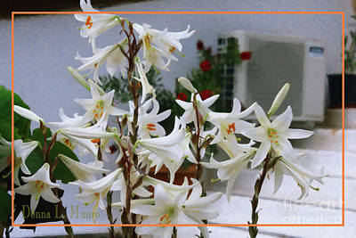 Digital Art - White Lilies by Donna L Munro