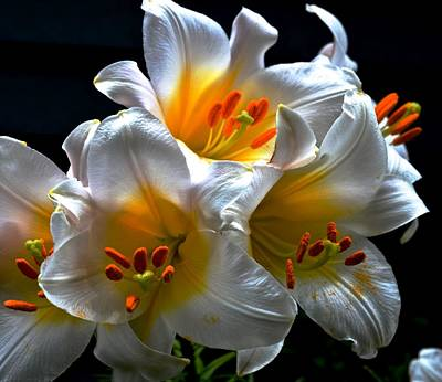 Photograph - White Lilies by Rita Mueller