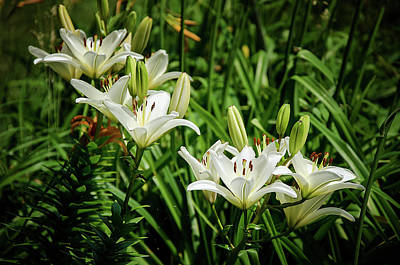 Photograph - White Lilies by Susan McMenamin