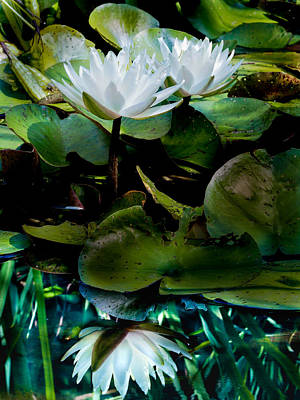 Photograph - White Lilies, White Reflection by Paula Ponath