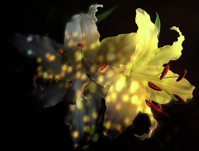 Photograph - White Lilies With Shadows And Light by Johanna Hurmerinta
