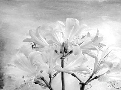 White Lillies Art Print by Marsha Heiken