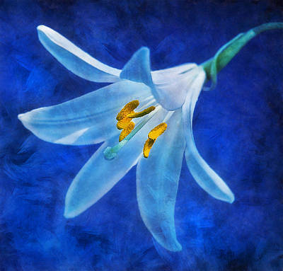 Digital Art - White Lilly by Ian Mitchell