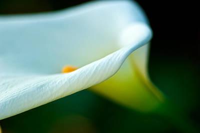 White Lily Art Print by DRK Studios