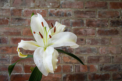 Kim Fearheiley Photography - White Lily by David Head