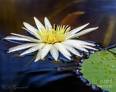 Photograph - White Lily On Pond by Les Greenwood