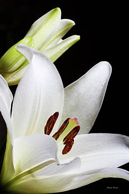 Photograph - White Lily Promise by Phyllis Denton