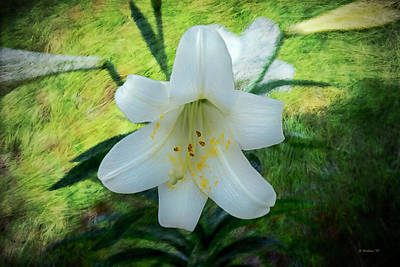 Mixed Media - White Lily - Textures by Brian Wallace