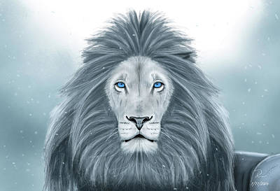Painting - White Lion by R Across