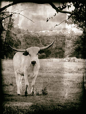 Digital Art - White Longhorn Bull by Bartz Johnson