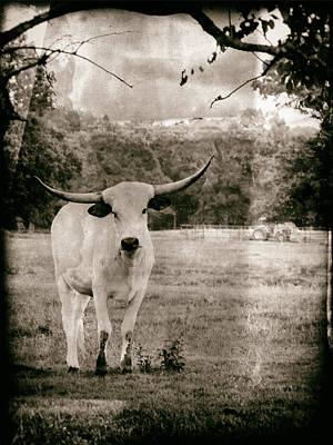 Digital Art - White Longhorn Bull by Bartz Johnson