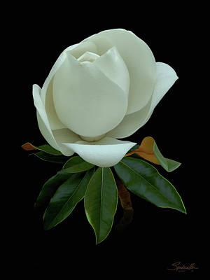 Digital Art - White Magnolia Bud by IM Spadecaller