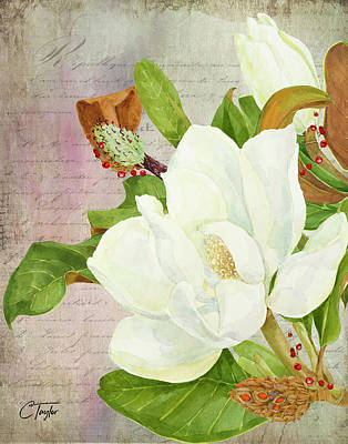 Mixed Media - White Magnolia by Colleen Taylor